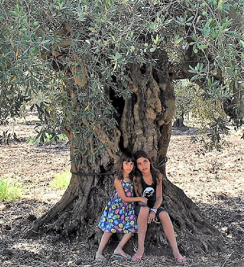 Un olivo e due bambine